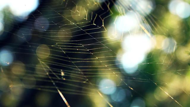 Sunrays on a Spiderweb