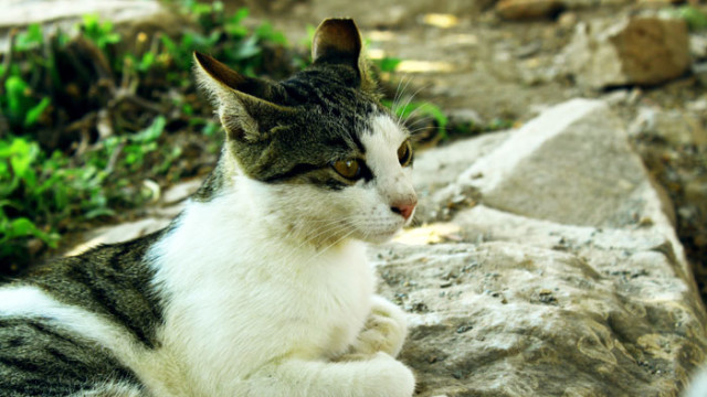 A Cat from Ephesus