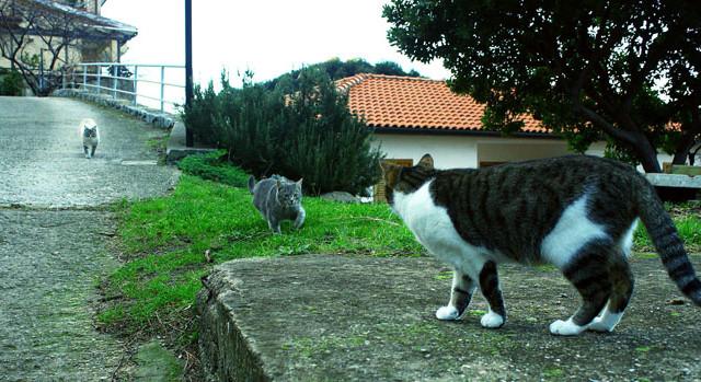 Kitten Followed by Girls